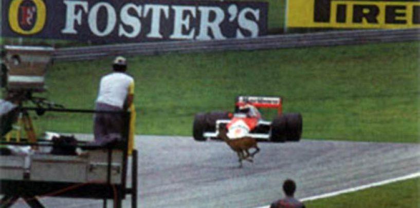 """<span class=""""entry-title-primary"""">Austria 1987: tra cerbiatti, ripartenze e bernoccoli</span> <span class=""""entry-subtitle"""">30 anni fa uno dei week-end più folli della storia della F1</span>"""
