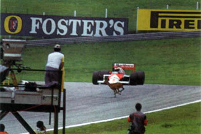 Austria 1987: tra cerbiatti, ripartenze e bernoccoli